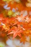 五颜六色的秋叶 免版税图库摄影