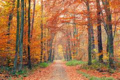 五颜六色的秋天公园 免版税库存图片