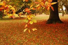 五颜六色的秋天公园 库存照片