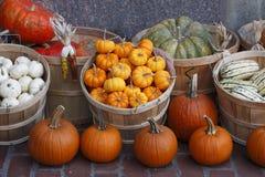 五颜六色的秋天南瓜压蔬菜 免版税库存照片