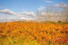 五颜六色的秋天叶子在多云天空下 免版税库存图片