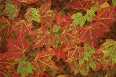 五颜六色的秋天叶子挂毯 图库摄影