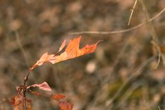 五颜六色的秋天叶子有模糊的Bokeh背景 库存图片