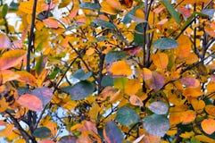 五颜六色的秋天叶子背景 免版税库存照片