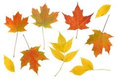五颜六色的秋天叶子集合。 免版税库存图片