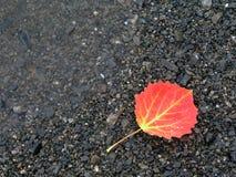 五颜六色的秋天叶子 图库摄影