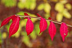 五颜六色的秋天叶子 免版税库存图片