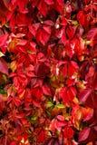 五颜六色的秋天叶子 免版税库存照片