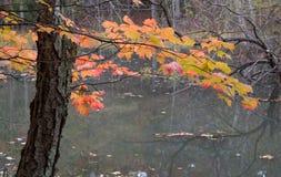 五颜六色的秋天叶子 库存图片