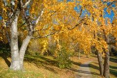五颜六色的秋天在公园,多伦多,加拿大 库存图片