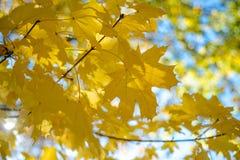五颜六色的秋天在公园,多伦多,加拿大 库存照片