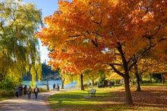 五颜六色的秋天在公园,多伦多,加拿大 免版税库存照片
