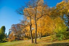 五颜六色的秋天在公园,多伦多,加拿大 免版税图库摄影