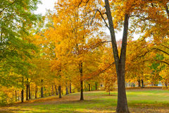 五颜六色的秋天在公园 库存照片