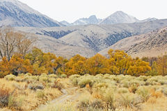 五颜六色的秋天在内华达山脉 免版税库存照片