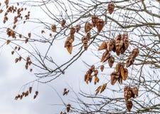 五颜六色的秋天在分支,自然摘要离开 库存图片