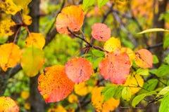 五颜六色的秋天在分支,自然摘要离开 库存照片