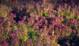 五颜六色的秋天在城市 开花的秋天庭院 免版税库存照片