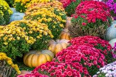 五颜六色的秋天在莫斯科市,俄罗斯 图库摄影