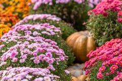 五颜六色的秋天在莫斯科市,俄罗斯 免版税库存图片