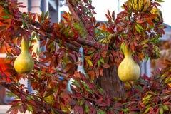五颜六色的秋天在莫斯科市,俄罗斯 免版税库存照片