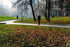 五颜六色的秋天在10月公园 库存照片