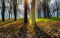 五颜六色的秋天在10月公园 免版税库存图片