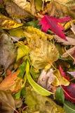 五颜六色的秋天季节性叶子垂直的特写镜头  免版税库存照片