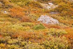 五颜六色的秋天山坡灌木 图库摄影