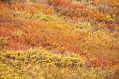 五颜六色的秋天山坡灌木 库存照片