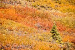 五颜六色的秋天山坡灌木 免版税库存图片