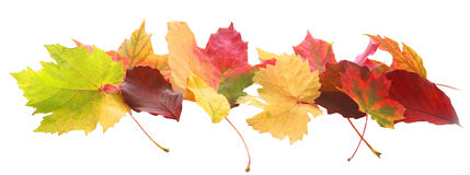 五颜六色的秋天或秋天叶子横幅  免版税库存图片