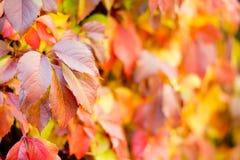 五颜六色的秋天或秋天背景 库存图片