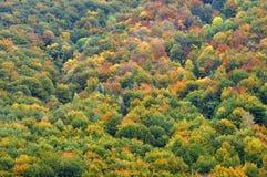 五颜六色的秋天林木 库存图片