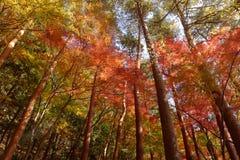 五颜六色的秋天林木 免版税库存照片
