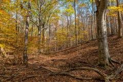 五颜六色的秋天树在森林里 免版税库存图片