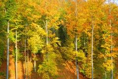 五颜六色的秋天树在被日光照射了森林里 免版税库存照片