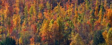 五颜六色的秋天树 库存图片