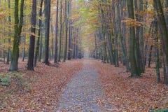 五颜六色的秋天森林道路& x28; W& x29; 库存照片