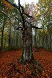 五颜六色的秋天森林风景 免版税库存图片
