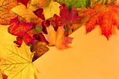 五颜六色的秋天槭树在橙色背景离开与文本的拷贝空间 秋天背景特写镜头上色常春藤叶子橙红 免版税库存照片