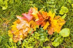 五颜六色的秋天槭树在绿草背景离开  顶视图 免版税库存照片