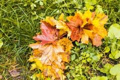五颜六色的秋天槭树在绿草背景离开  顶视图 免版税库存图片