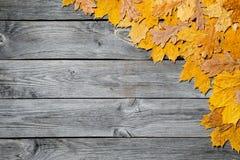 五颜六色的秋天槭树框架在木背景留下特写镜头 库存照片