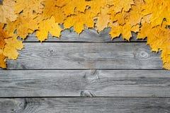 五颜六色的秋天槭树框架在木背景留下特写镜头 图库摄影