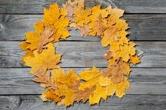五颜六色的秋天槭树框架在木背景留下特写镜头 免版税库存照片