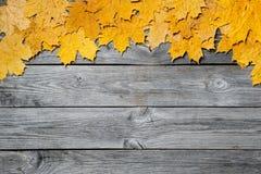 五颜六色的秋天槭树框架在木背景留下特写镜头 免版税库存图片