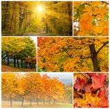 五颜六色的秋天照片拼贴画 库存照片