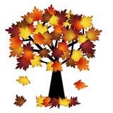 五颜六色的秋天留下结构树 图库摄影