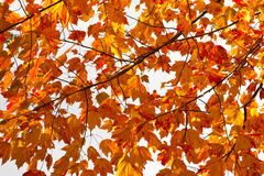 五颜六色的秋天留下背景纹理 免版税库存图片